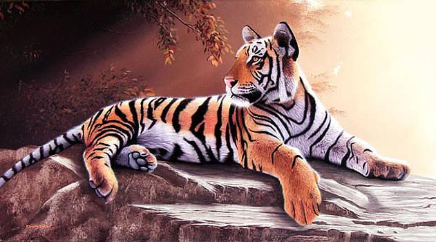 Tigre joven by Sergio Gaspar