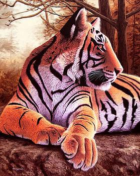 Tigre solitario by Sergio Gaspar