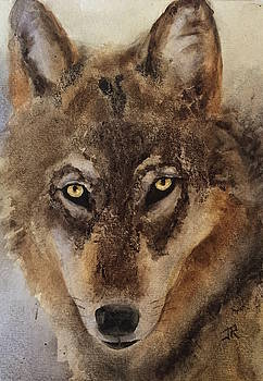Timber Wolf by June Rollins