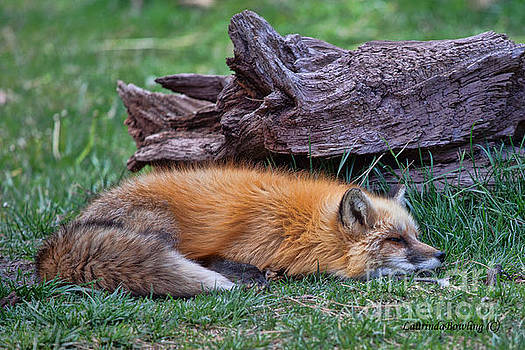 Time for a nap by Laurinda Bowling