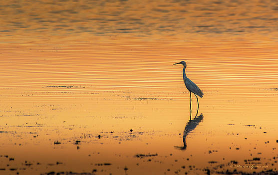 Time to Reflect by Marvin Spates