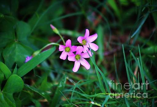 Tiny Blossoms in the Grass by Craig Wood