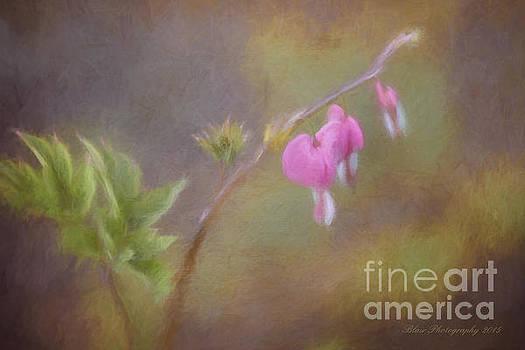 Tiny Hearts by Linda Blair