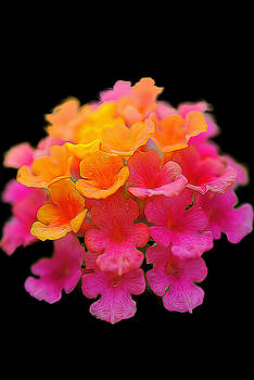 Cindy Boyd - Tiny Pink and Orange Flowers