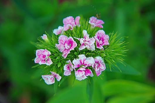 Tiny Pinks by Sarah Barber