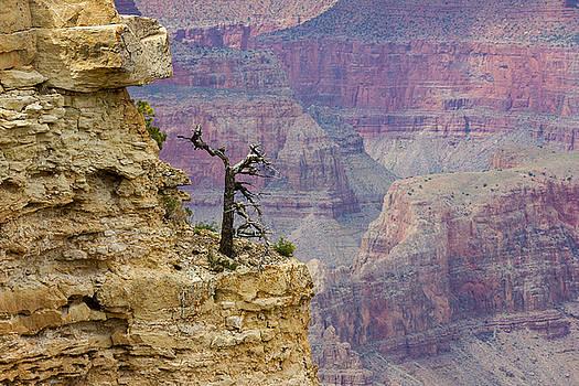 Tiny Tree by Penny Meyers