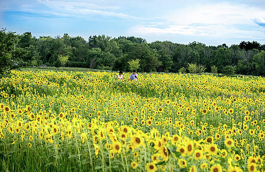 Tiptoe Through the Sunflowers by Cathy Donohoue