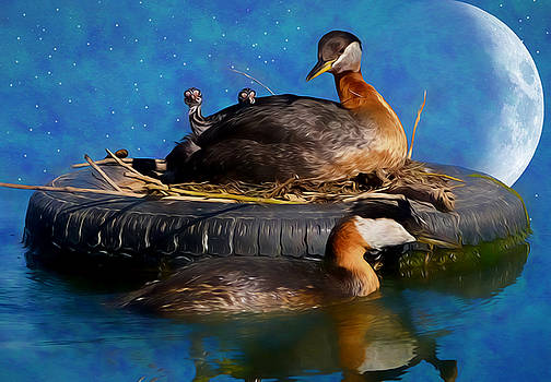 Tire Nest for Red-Necked Grebes by Ericamaxine Price