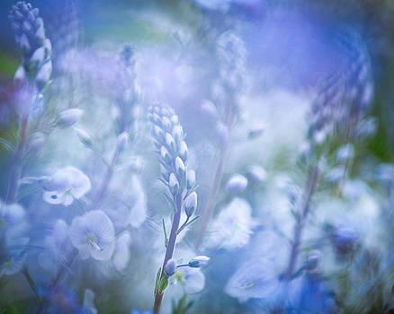 Tissington white Abstract by Sarah-fiona  Helme