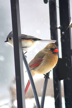 Titmouse and Cardinal by Diane Merkle