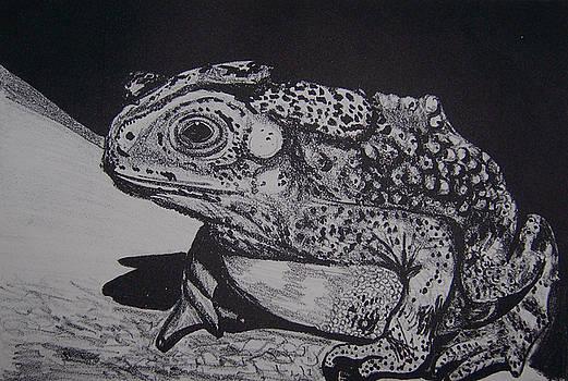 Toad by Jude Labuszewski