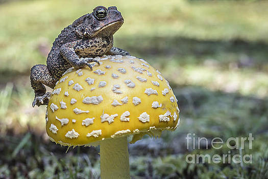 Toads Stool by David Rucker
