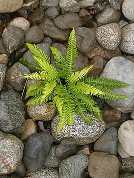 Tofino fern 2 by Claudia Stewart
