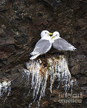 Together by Robert Pilkington