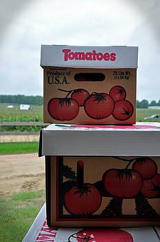 Tomatoes by David Dittmann