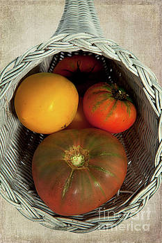 Tomatoes in a Horn of Plenty Basket 2 by Dan Carmichael