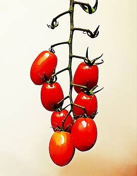 Tomatoes on the Vine by Paul Wilford