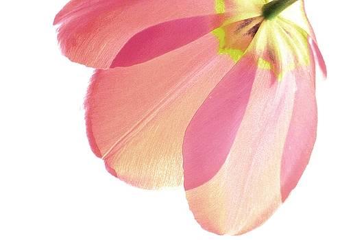 Topsy Turvy Tulip by Angela Davies
