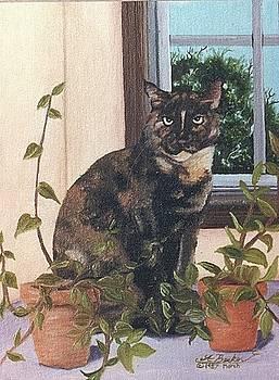 Tortoise Cat by Ann Becker