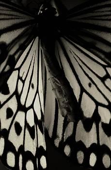 Tough Beauty by The Art Of Marilyn Ridoutt-Greene