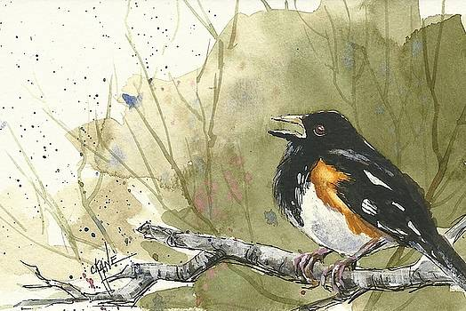 Towhee Call by Christine Camp