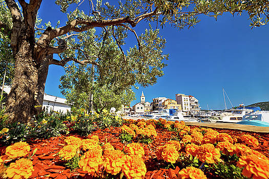 Town of Pirovac flowers and olive tree view by Dalibor Brlek