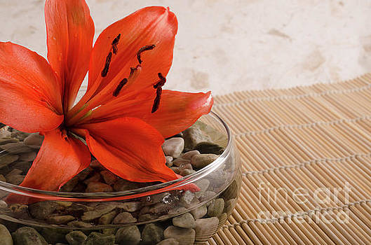 Tranquil Lily Nature Photograph by Melissa Fague
