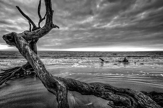Debra and Dave Vanderlaan - Treasures by the Sea Black and White