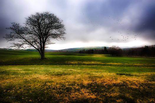 Tree Alone by Bob Orsillo