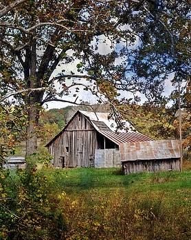 Marty Koch - Tree and Barn