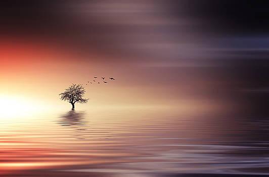 Tree and birds on lake sunset by Bess Hamiti