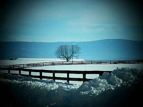 Tree and Fence in Snow by Joyce Kimble Smith
