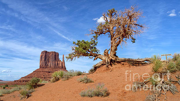Tree and Mitten by Jerry Fornarotto