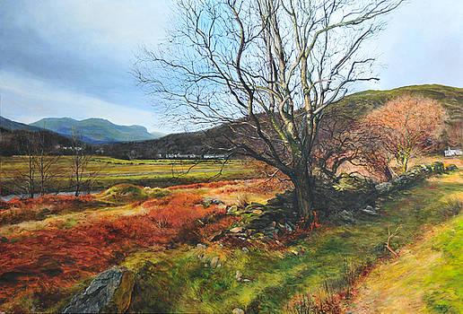 Harry Robertson - Tree at Aberglaslyn