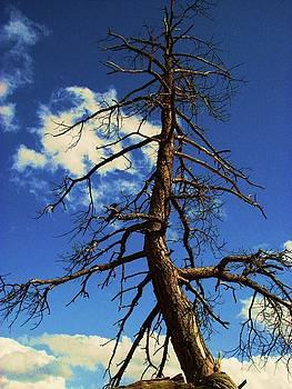Martina Fagan - Tree at Bryce Canyon Utah.