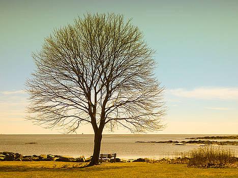 Tree at New Castle Common by Nancy de Flon