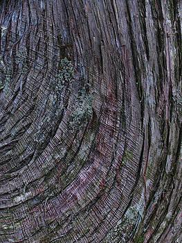 Juergen Roth - Tree bark