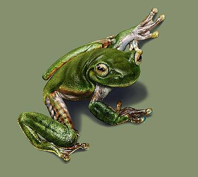 Tree Frog  by Owen Bell