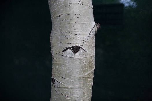 Tree Stare by Daniel Furon