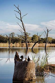 Tree Image by Douglas Barnard