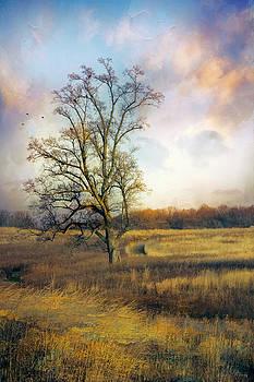 Tree in Meadow by John Rivera