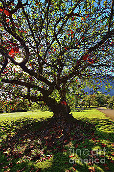 Tree in Red and Green by Craig Wood