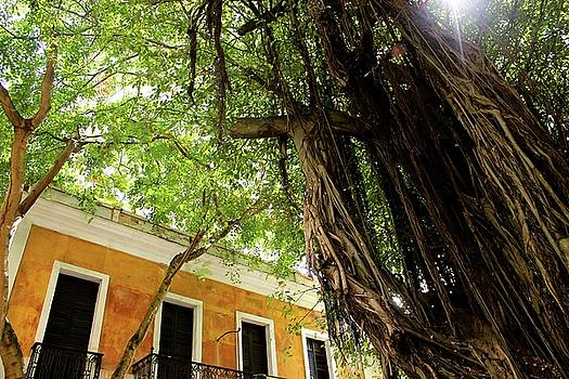Tree in San Juan by Janice Aponte