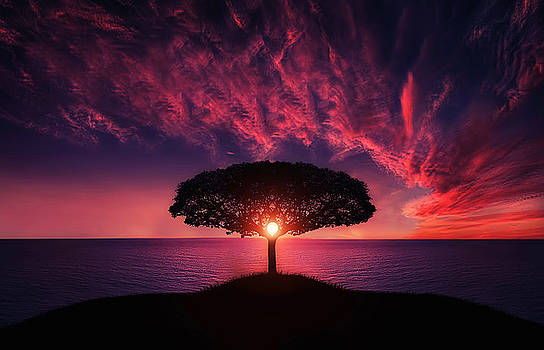 Tree in sunset by Bess Hamiti