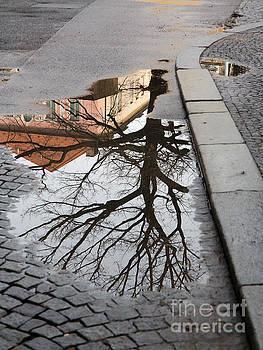 Tree in the Puddle by Michal Boubin