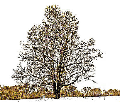 Tree In Winter by Lydia Holly