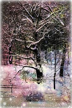 Tree in Winter by Robin Regan