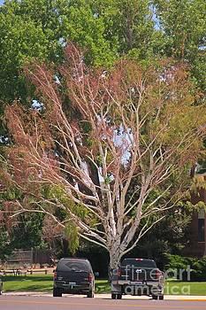 Tree by John Malone