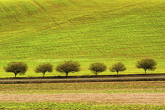Tree line  by Dee Browning