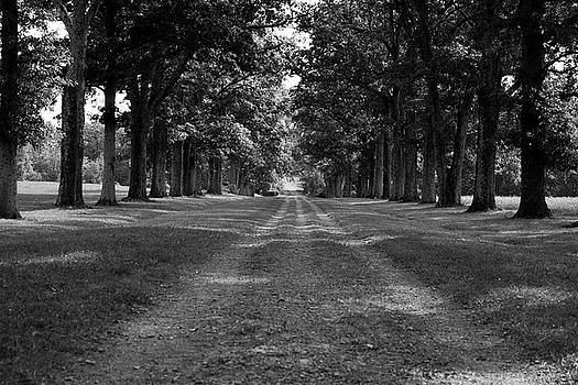 Tree-Lined Carriageway by Jeff Severson